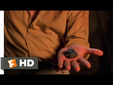 The Mummy (8/10) Movie CLIP - Scarab...