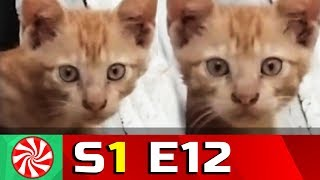 Funny Cat Videos for Kids | S1-EP12 | Hide Cat || Capture Candy Kids TV