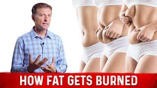 How Fat Gets Burned
