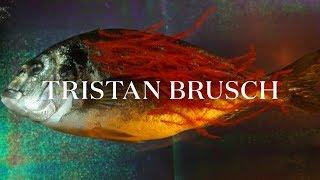 TRISTAN BRUSCH - TIER (Offizielles Video)
