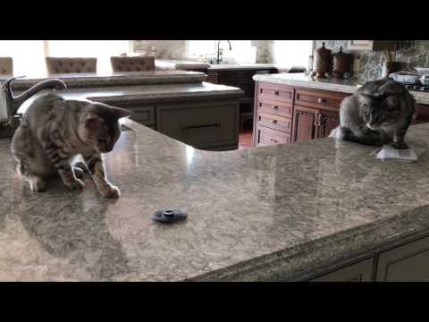 Cats Vs. Fidget Spinner