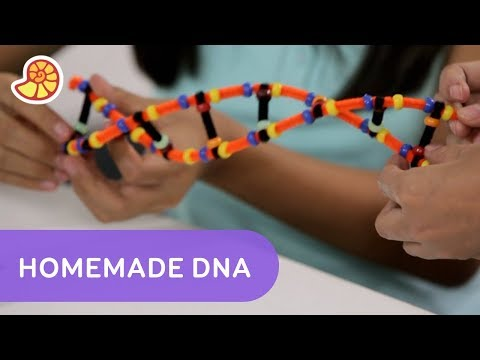 Make Your Own Double Helix DNA Strand | One Stop Science Shop