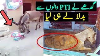 Donkey Eat Imran Khan Election Campaign Posters After Viral Picture Of Donkey Named Nawaz