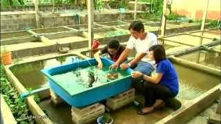 Farm fish of Thai 2