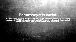 Medical vocabulary: What does Pneumocystis carinii mean
