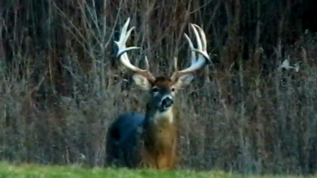 big buck in my back yard in ohio youtube