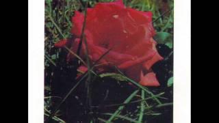 Les Lionceaux des Cayes - Pourquoi la rose?