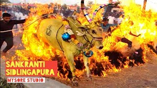 Bullocks Run Jump Over FIRE  Sankranti Sidlingapura (15.01.2020) Mysore Tourism