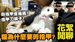 貓咪為什麼要剪指甲 貓會痛嗎 後宮花絮閒聊