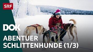 Abenteuer Schlittenhunde | Mit Huskys unterwegs in Finnisch Lappland (1/3) | Doku | SRF DOK