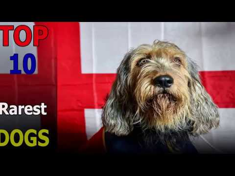 Top 10 rarest dog breeds in the world | Top 10 animals