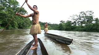 The Amazon–Joining forces to protect the world's largest rainforest