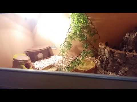 How to clean/set up a snake tank done by a 7 year old