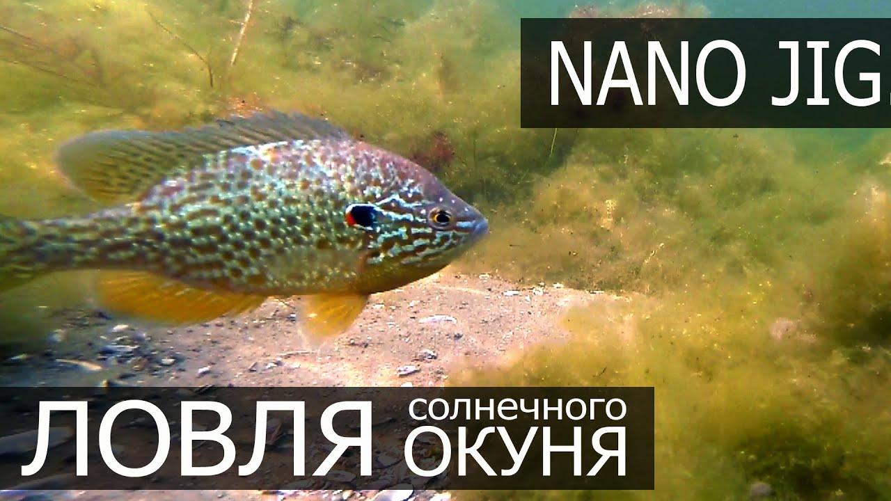 Наноджиг летом. Ловля солнечного окуня. Fishing for Sunfish Live