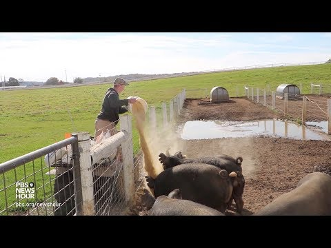Meet a teen farmer earning profits from pasture-raised pigs