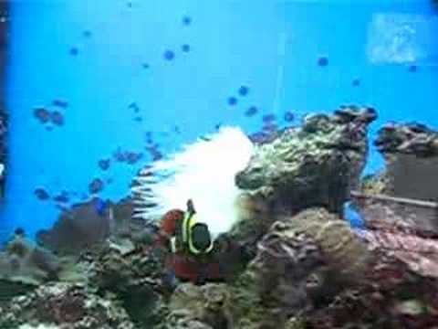 65 Gallon Tru Vu Aquarium