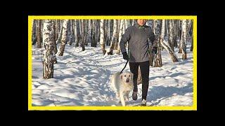 Ведущий эндокринолог александр аметов: «заболел диабетом? заводи собаку!»