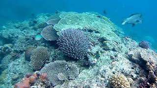 Heron Island, Great Barrier Reef, Queensland Australia, March 2018