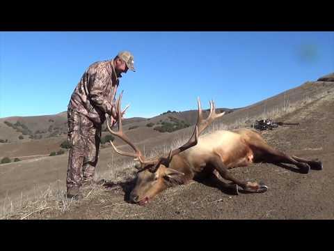 Monster Tule Elk Hunt