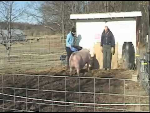 The MSU Student Organic Farm welcomes a new addition