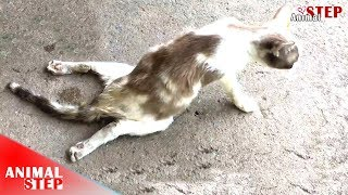 Paralyzed Cat Dragging On The Street Just Find Someone For Help