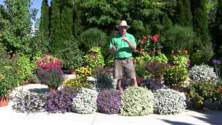 Plants and Flowers: 2013 Standout Performers - Part 3