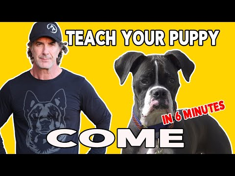How to teach Your PUPPY to COME When Called - Best Puppy Training