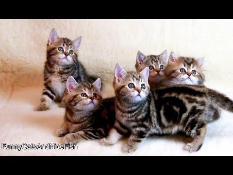 Singing Cat and Cute Dancing Kittens