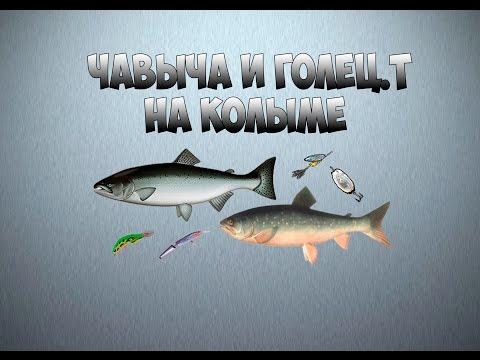 Русская рыбалка 3.99 Кач с 33 по 45-50 разряд