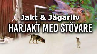 Jakt \u0026 Jägarliv - Harjakt med stövare (2008)