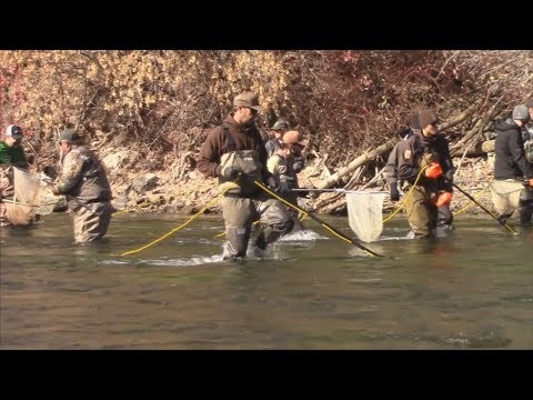 Lower Provo River Fish Sampling - Utah