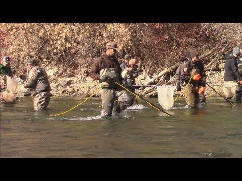 Lower Provo River Fish Sampling - Utah