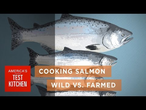 Science: How Wild Salmon Differs from Farmed Salmon and How to Cook Salmon to the Right Temperature