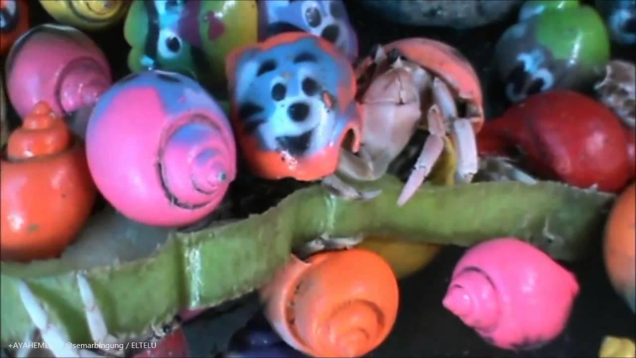 Keong Laut Kelomang Unik Bergambar Karakter Kartun YouTube