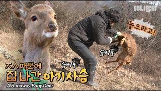 근데 가출한 이유가 그게 뭐냐 (하고 센척을 해봅니다 ㅈㅅ 나도 무서움..)  l Baby Deer Runs Away From Home Because of..