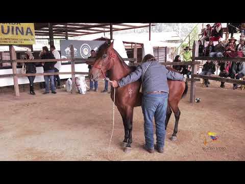 El domador de caballos. from YouTube · Duration:  3 minutes 6 seconds
