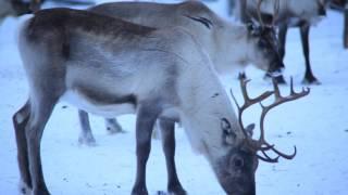オーロラを見にフィンランドまでいきましたが・・・