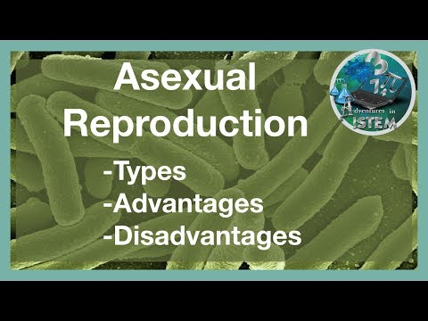 Asexual reproduction used in a sentence
