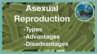 Of reproduction Advantages sexual