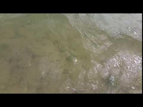 Wattwandern von Amrum nach Föhr