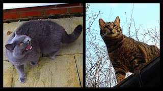 NEIGHBOUR CAT ATTACK! | CHRIS & EVE