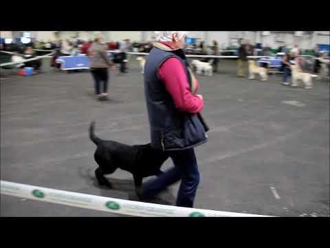 Gundog Breeds Association of Scotland Nov 18