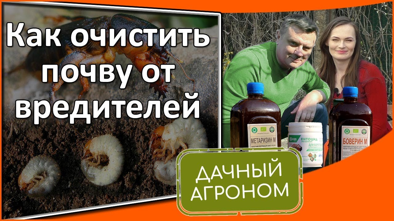Как очистить почву от медведки и личинок майского жука / Метаризин, Боверин, Энтоцид как применять