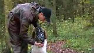 Самый простой способ надеть намордник на собаку