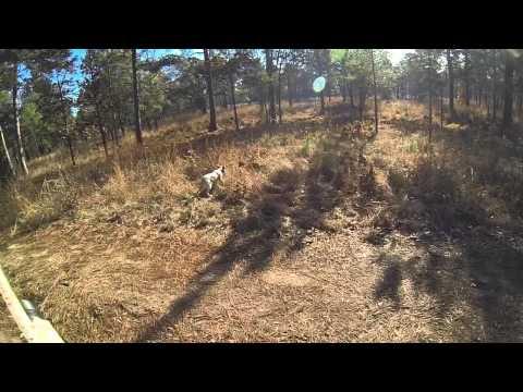 Rio Piedra Quail Hunt - Camilla, GA