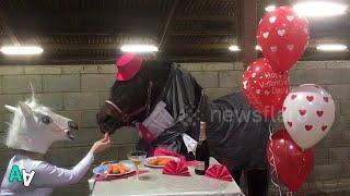 Horse Enjoys Romantic Valentine's Day Dinner