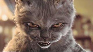 Приколы про котов.Смешные домашние животные.Кошка не в духе. Я обиделась.