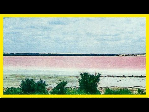 Famous esperance pink lake fades, leaving tourists confused