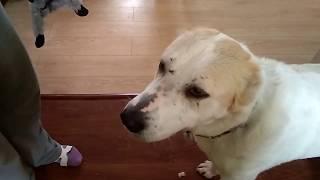 Как научить собаку из приюта играть