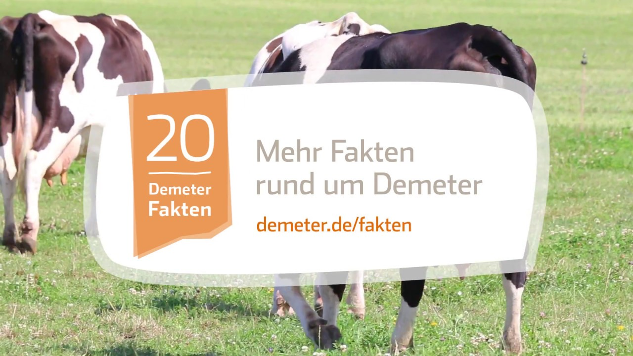 Kuh leckt sich die Nase Rinderzunge ganz groß Ansichtskarte